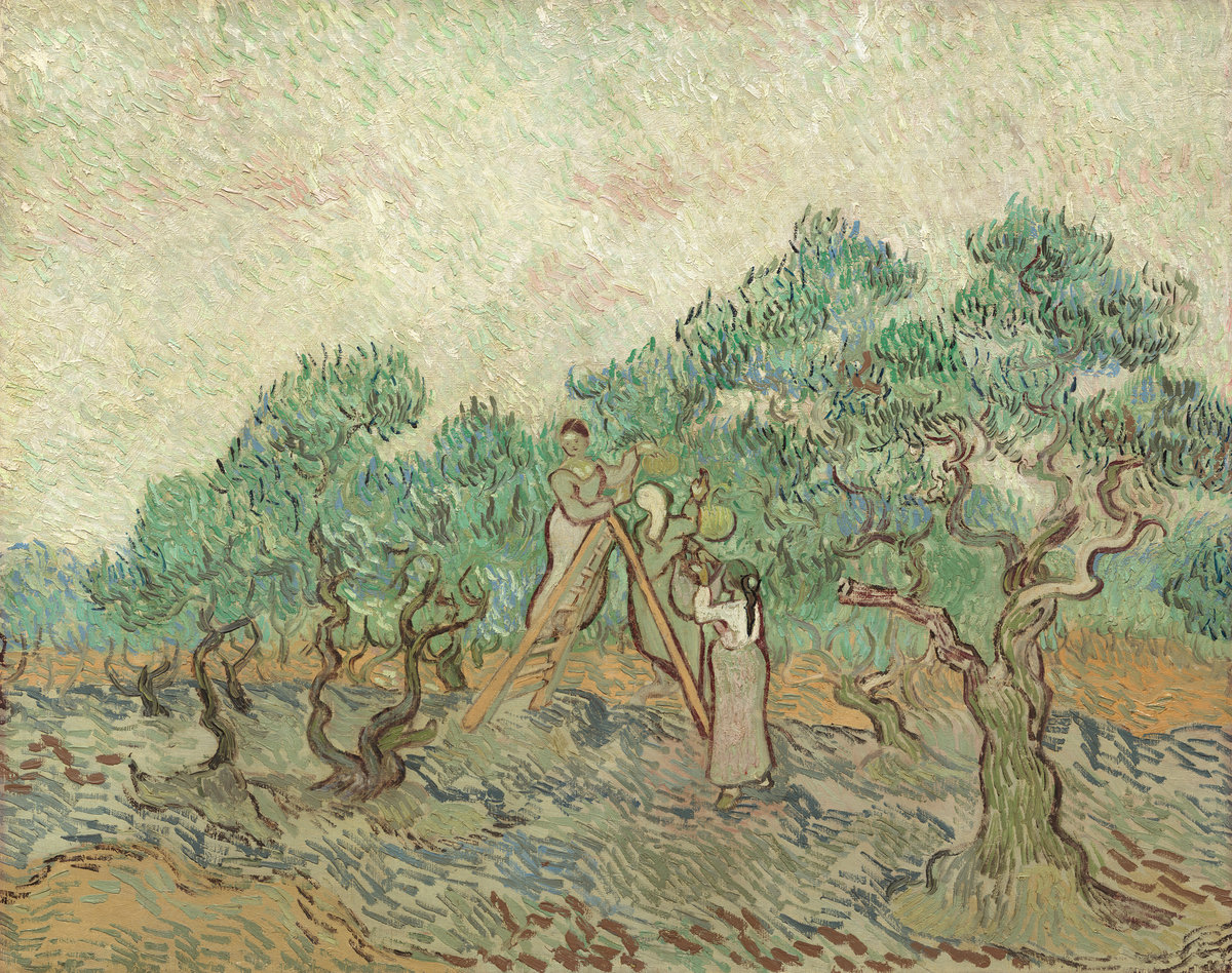 Vincent van Gogh (Dutch, 1853 - 1890 ), The Olive Orchard, 1889, oil on canvas, Chester Dale Collection